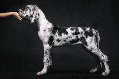 όμορφο πορτρέτο σκυλιών Στοκ φωτογραφία με δικαίωμα ελεύθερης χρήσης