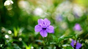 Όμορφο πορφυρό λουλούδι κινηματογραφήσεων σε πρώτο πλάνο στο υπόβαθρο της πολύβλαστης πρασινάδας φιλμ μικρού μήκους