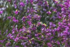 Όμορφο πορφυρό λουλούδι χλόης στον κήπο στοκ φωτογραφία