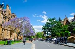 Όμορφο πορφυρό λουλούδι Jacaranda που ανθίζει κοντά στο ιστορικό κτήριο στην πανεπιστημιακή την άνοιξη εποχή του Σίδνεϊ στοκ εικόνες