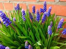 Όμορφο πορφυρό λουλούδι και πράσινο υπόβαθρο φύσης Στοκ Εικόνες
