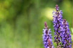 Πορφυρό λουλούδι με το διάστημα αντιγράφων Στοκ Φωτογραφία