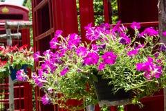 Όμορφο πορφυρό λουλούδι με το τηλεφωνικό κιβώτιο Στοκ φωτογραφίες με δικαίωμα ελεύθερης χρήσης