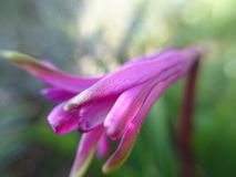 Όμορφο πορφυρό λουλούδι στη μακροεντολή στοκ φωτογραφία με δικαίωμα ελεύθερης χρήσης