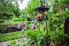 Όμορφο πορφυρό hybrida πετουνιών πετουνιών στη μαλακή εστίαση κήπων Στοκ Φωτογραφία