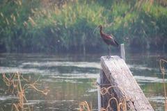 Όμορφο πουλί σε μια ξύλινη ακτίνα στοκ φωτογραφία με δικαίωμα ελεύθερης χρήσης