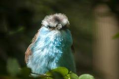 Όμορφο πουλί Στοκ Φωτογραφίες