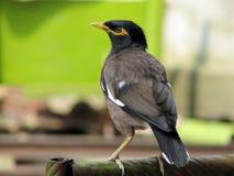 όμορφο πουλί Στοκ εικόνα με δικαίωμα ελεύθερης χρήσης