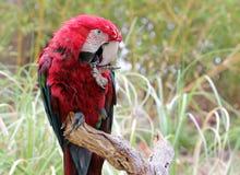 Όμορφο πουλί παπαγάλων Στοκ εικόνες με δικαίωμα ελεύθερης χρήσης