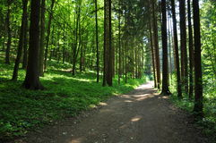 Όμορφο πράσινο δάσος στοκ φωτογραφία με δικαίωμα ελεύθερης χρήσης
