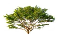 όμορφο πράσινο δέντρο Στοκ εικόνες με δικαίωμα ελεύθερης χρήσης