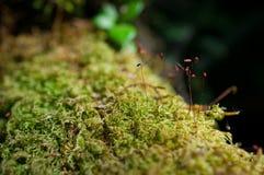 Όμορφο πράσινο βρύο κινηματογραφήσεων σε πρώτο πλάνο στο δασικό/φρέσκο και συμπαθητικό δέντρο στον κήπο Στοκ Φωτογραφίες