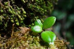 Όμορφο πράσινο βρύο κινηματογραφήσεων σε πρώτο πλάνο στο δασικό/φρέσκο και συμπαθητικό δέντρο στον κήπο Στοκ εικόνα με δικαίωμα ελεύθερης χρήσης