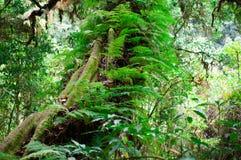 Όμορφο πράσινο βρύο κινηματογραφήσεων σε πρώτο πλάνο στο δασικό/φρέσκο και συμπαθητικό δέντρο στον κήπο Στοκ φωτογραφία με δικαίωμα ελεύθερης χρήσης