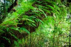 Όμορφο πράσινο βρύο κινηματογραφήσεων σε πρώτο πλάνο στο δασικό/φρέσκο και συμπαθητικό δέντρο στον κήπο Στοκ φωτογραφίες με δικαίωμα ελεύθερης χρήσης