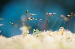 Όμορφο πράσινο βρύο κινηματογραφήσεων σε πρώτο πλάνο στο δασικό/φρέσκο και συμπαθητικό δέντρο στον κήπο Στοκ Φωτογραφία