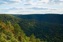 Όμορφο πράσινο δάσος ενάντια στο μπλε ουρανό με τα σύννεφα Φυσικό πάρκο στοκ εικόνες