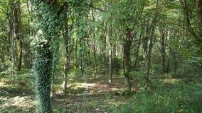Όμορφο πράσινο δάσος στο πάρκο Ευρώπη Plitvice Στοκ εικόνα με δικαίωμα ελεύθερης χρήσης