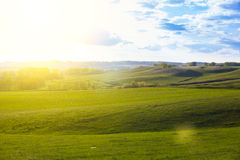 όμορφο πράσινο ηλιοβασίλ&e Στοκ Φωτογραφίες
