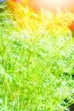 Όμορφο πράσινο κρεβάτι σε ένα πάρκο στο υπόβαθρο φύσης στοκ εικόνες με δικαίωμα ελεύθερης χρήσης