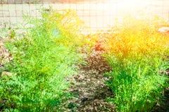 Όμορφο πράσινο κρεβάτι σε ένα πάρκο στο υπόβαθρο φύσης στοκ φωτογραφίες