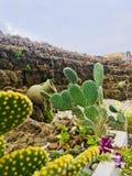 Όμορφο πράσινο λουλούδι κάκτων στοκ φωτογραφία με δικαίωμα ελεύθερης χρήσης