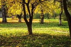 Όμορφο πράσινο ξέφωτο φθινοπώρου Στοκ εικόνα με δικαίωμα ελεύθερης χρήσης