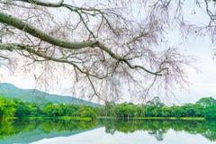Όμορφο πράσινο πάρκο με τη λίμνη, ANG Kaew σε Chiang Mai Universi Στοκ Εικόνες