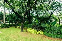 Όμορφο πράσινο πάρκο πόλεων με το διάφορο είδος φωτογραφίας εγκαταστάσεων και λουλουδιών που λαμβάνεται στην Τζακάρτα Ινδονησία Στοκ εικόνες με δικαίωμα ελεύθερης χρήσης
