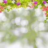 Όμορφο πράσινο πλαίσιο φύλλων με το λουλούδι στη θαμπάδα φύσης τοπίου Στοκ Φωτογραφία