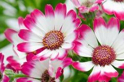 όμορφο πράσινο ροζ λουλουδιών Στοκ Εικόνα