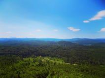 Όμορφο πράσινο τοπίο του δάσους της Σλοβενίας Στοκ Εικόνα