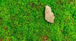 Όμορφο πράσινο υπόβαθρο βρύου με ένα κομμάτι του φλοιού offcenter Στοκ φωτογραφίες με δικαίωμα ελεύθερης χρήσης