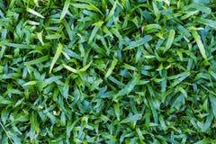 Όμορφο πράσινο υπόβαθρο χλόης στοκ φωτογραφία με δικαίωμα ελεύθερης χρήσης