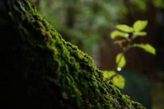 όμορφο πράσινο χρώμα κινηματογραφήσεων σε πρώτο πλάνο φύσης στο βρύο δέντρων κήπων Στοκ εικόνες με δικαίωμα ελεύθερης χρήσης