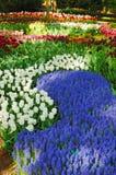 όμορφο πρωί κήπων keukenhof ηλιόλο&upsilo στοκ φωτογραφία