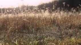 Όμορφο πρωί στο λιβάδι απόθεμα βίντεο