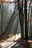 Όμορφο πρωί στο misty πάρκο φθινοπώρου με τις ακτίνες ήλιων πτώση τονισμένος Στοκ εικόνες με δικαίωμα ελεύθερης χρήσης