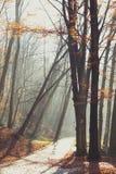 Όμορφο πρωί στο misty πάρκο φθινοπώρου με τις ακτίνες ήλιων πτώση τονισμένος Στοκ Εικόνα