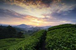 Όμορφο πρωί, τοπίο φυτειών τσαγιού πέρα από την ανατολή backgroun στοκ φωτογραφία