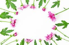 Όμορφο πλαίσιο λουλουδιών που γίνεται από το λουλούδι χρυσάνθεμων Στοκ Φωτογραφία