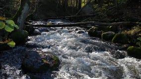 Όμορφο ρεύμα βαθιά στο δάσος το φθινόπωρο απόθεμα βίντεο