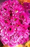 όμορφο ροζ λουλουδιών Στοκ εικόνες με δικαίωμα ελεύθερης χρήσης