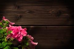 όμορφο ροζ πετουνιών Στοκ φωτογραφία με δικαίωμα ελεύθερης χρήσης