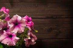 όμορφο ροζ πετουνιών Στοκ εικόνες με δικαίωμα ελεύθερης χρήσης