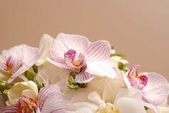 Όμορφο ρόδινο λουλούδι κρίνων που απομονώνεται στο άσπρο υπόβαθρο κλείστε επάνω Στοκ Εικόνες