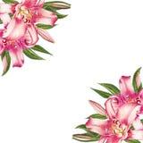 Όμορφο ρόδινο πλαίσιο γωνιών κρίνων r Floral τυπωμένη ύλη Σχέδιο δεικτών διανυσματική απεικόνιση