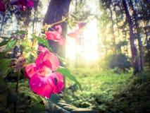 Όμορφο ρόδινο άγριο λουλούδι Στοκ Φωτογραφίες