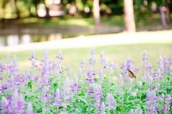 Όμορφο ρόδινο και πορφυρό λουλούδι Στοκ Εικόνες