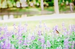 Όμορφο ρόδινο και πορφυρό λουλούδι Στοκ εικόνα με δικαίωμα ελεύθερης χρήσης